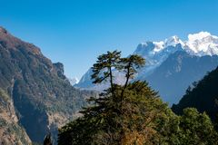 Beautiful landscape of double tree and background of Manaslu in the Annapurna Circuit with clear sky, Himalayas. Beautiful landscape of double tree and royalty free stock photography