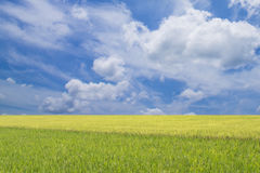 Beautiful Landscape with a dramatic blue sky and two diffrent to Stock Photos