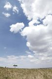 Beautiful landscape with dramatic cloud of Masai Mara National Park Stock Images