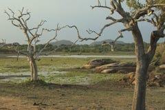 Beautiful landscape at dusk Stock Image