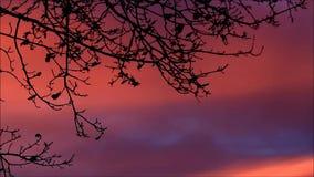 Beautiful landscape evening nature stock video