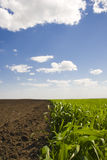 Beautiful landscape from a field Stock Images