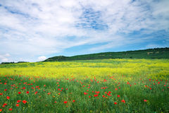 Beautiful Landscape. Field in Crimea. Stock Image