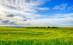 Free Beautiful Landscape Field Of Wheat, Cloud And Mountain Royalty Free Stock Photos - 31473358