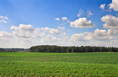 Beautiful landscape with field of potatos and cloudy sky. Royalty Free Stock Photos