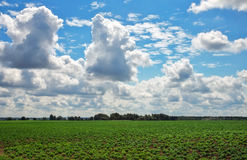 Beautiful landscape with field of potatos and cloudy sky. Royalty Free Stock Photography