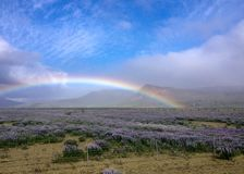 Beautiful landscape with field of purple lupinus, mountains, rainbow and blue sky in South Coast of Iceland royalty free stock image