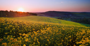 Beautiful landscape field of rapeseed in countr Royalty Free Stock Image
