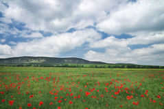 Beautiful Landscape. Field with red poppies. Stock Image