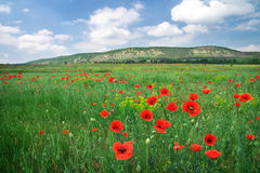Beautiful Landscape. Stock Photo