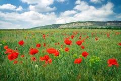 Beautiful Landscape. Stock Photos