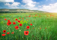 Beautiful Landscape. Royalty Free Stock Photography