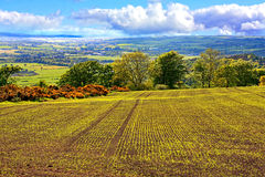 Beautiful landscape with fields in Springtime Stock Image