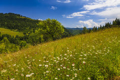 Beautiful landscape with flowering meadow, Stock Photo