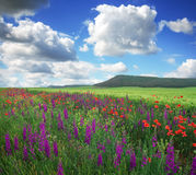 Beautiful landscape with flowers, field and mountain Royalty Free Stock Photos