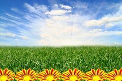 Beautiful landscape with flowers Gazania Royalty Free Stock Image