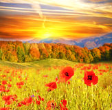 Beautiful landscape with flowers poppies on a background of moun Royalty Free Stock Image