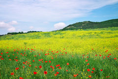 Beautiful Landscape with flowers. Royalty Free Stock Images