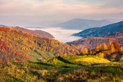 Beautiful landscape at foggy autumn sunrise. Red foliage on forested hills. cloud inversion in distant valley. beautiful season colors Stock Image
