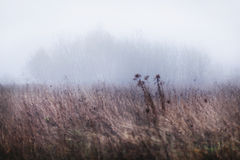 Beautiful landscape of foggy field Stock Photography