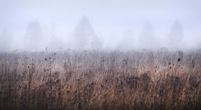 Beautiful landscape of foggy field Stock Photos