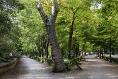 Beautiful landscape of footpaths among the trees in the park. Stock Images