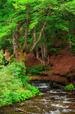 Beautiful landscape of forest and mountain river. Royalty Free Stock Photography