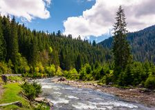 Beautiful landscape with forest river in mountains. Gorgeous springtime scenery on bright day with some clouds on a blue sky Royalty Free Stock Photos