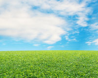 Beautiful landscape with fresh green meadow, cloud and blue sky Stock Photos
