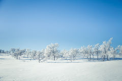 A beautiful landscape of a frozen plains in a snowy winter day Royalty Free Stock Photo
