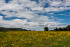 Beautiful landscape. A landscape full of colour with some clouds and yellow flowers an hill at background Stock Images