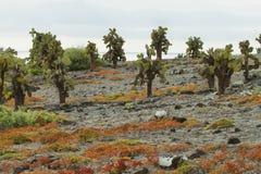Beautiful landscape of Galapagos South Plaza Royalty Free Stock Photo