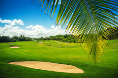 Beautiful landscape of a golf court with palm trees in Punta Can Royalty Free Stock Image