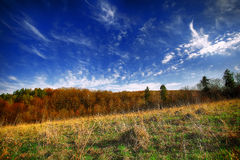 Beautiful landscape with grass, trees, sky and sun. Stock Image