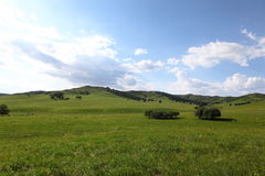 Beautiful landscape in grassland Stock Images