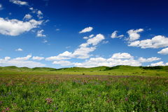 Beautiful landscape in grassland Royalty Free Stock Image