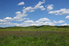 Beautiful landscape in grassland Royalty Free Stock Photos