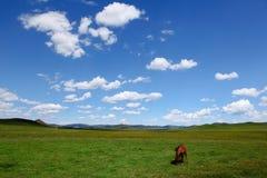 Beautiful landscape in grassland Stock Image