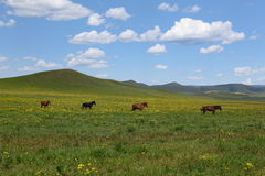 Beautiful landscape in grassland Royalty Free Stock Photography