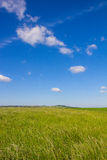 Beautiful Landscape Green Corn Field With Blue Cloudy Sky Stock Photos