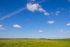Beautiful Landscape Green Corn Field With Blue Cloudy Sky Stock Photo