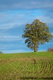 Beautiful landscape of green farmland and blue sky Stock Images