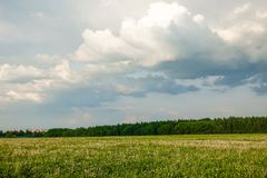 Beautiful landscape. Green field and cloudy sky. Central Russia. Moscow region.  stock photography