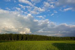 Beautiful landscape. Green field and cloudy sky. Central Russia. Moscow region.  royalty free stock photo