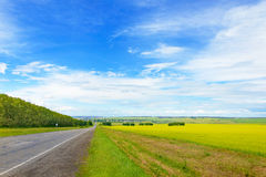 Beautiful Landscape with Green Grass, Blue Sky and Road. Summer Scene: Beautiful Landscape with Green Grass, Blue Sky and Road Stock Photos