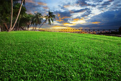 Beautiful landscape of green grass field park against dusky sky. On evening stock images