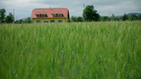 Beautiful landscape with green grass and house in background. Driving and recording landscape view, farms and weather stock footage