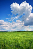 Beautiful landscape with green meadow and cloudy sky. Stock Photos