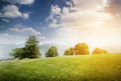 Beautiful landscape with green meadow. Trees, blue sky with clouds Royalty Free Stock Images