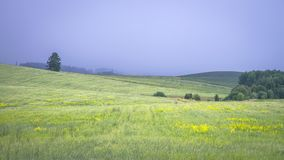 Beautiful landscape. Green summer field on blue sky before the thunderstorm.  Stock Photo